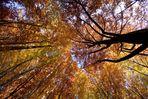 herbstlicher Waldtraum