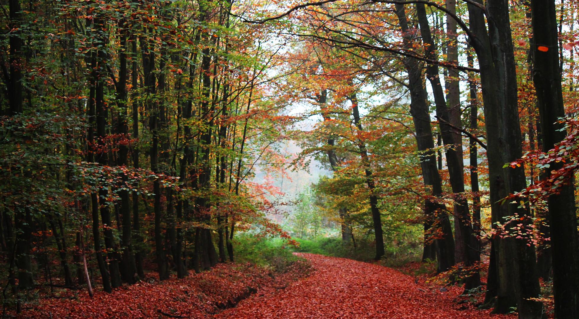 Herbstlicher Waldweg
