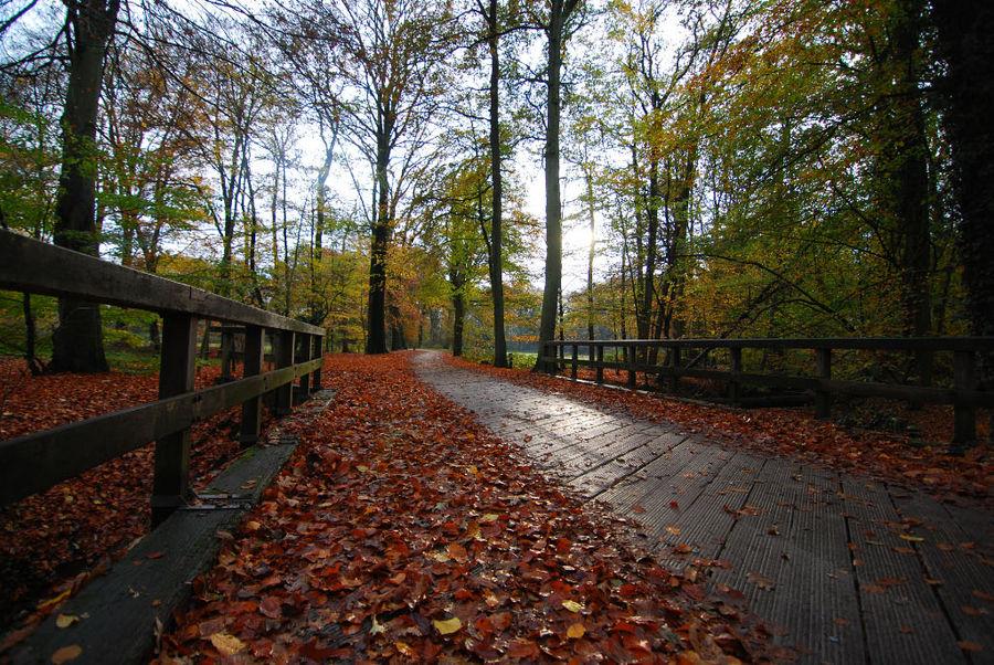 herbstlicher Waldweg bei Winterswijk