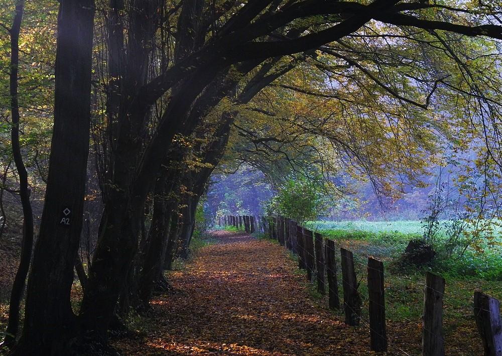 Herbstlicher Wanderweg . . .