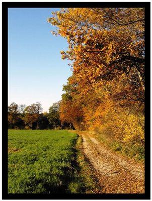Herbstlicher Wanderweg bei Bad Tölz