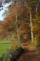 Herbstlicher Wanderweg im Neandertal