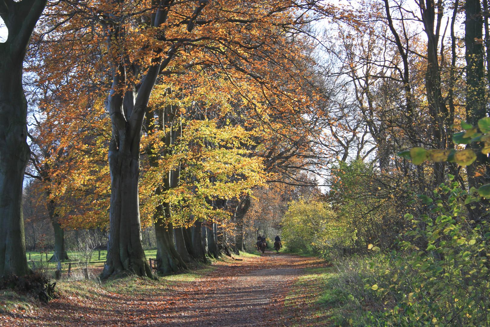 Herbstlicher Weg