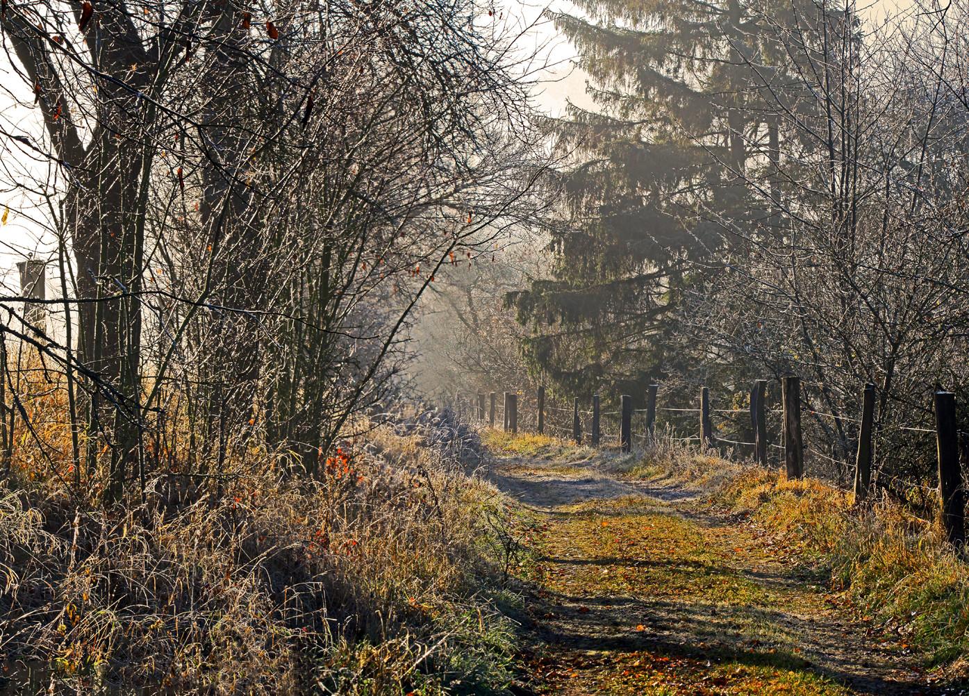 Herbstlicher Weg- Panorama