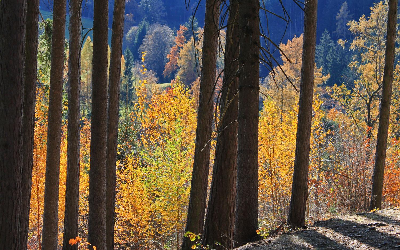 ** Herbstlicher Zauberwald **