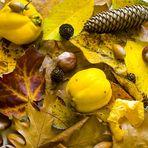 Herbstliches 1