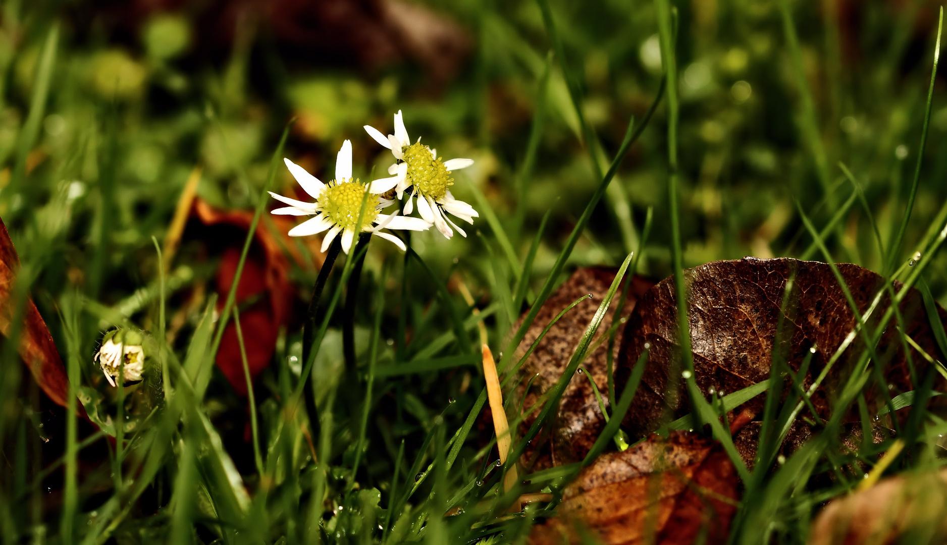 Herbstliches (3)