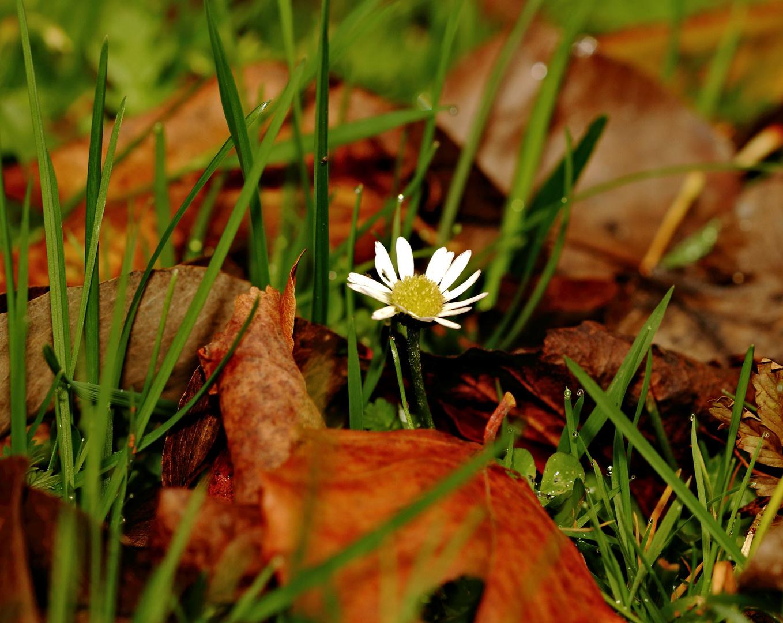 Herbstliches (4)