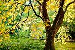 Herbstliches am Maschteich