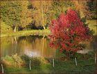 Herbstliches Anglerglück