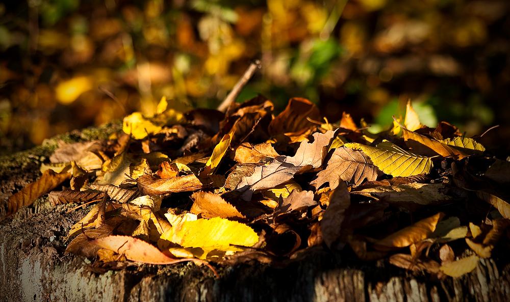 herbstliches Blätter wirrwarr