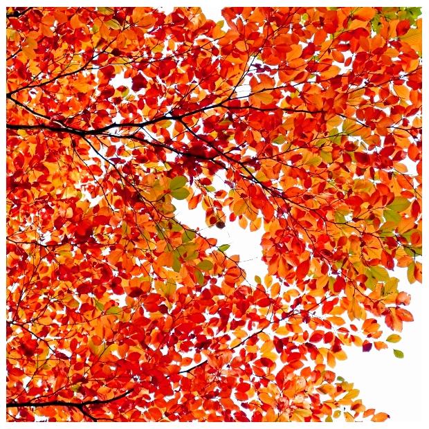 herbstliches Blätterwerk