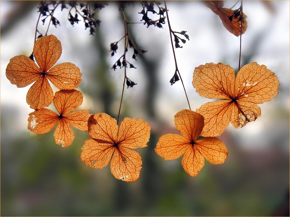 Herbstliches Collier