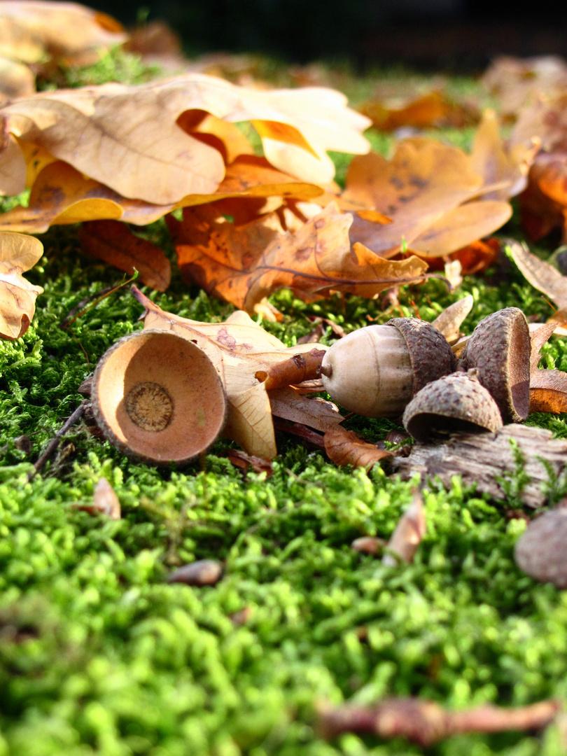 Herbstliches Detail