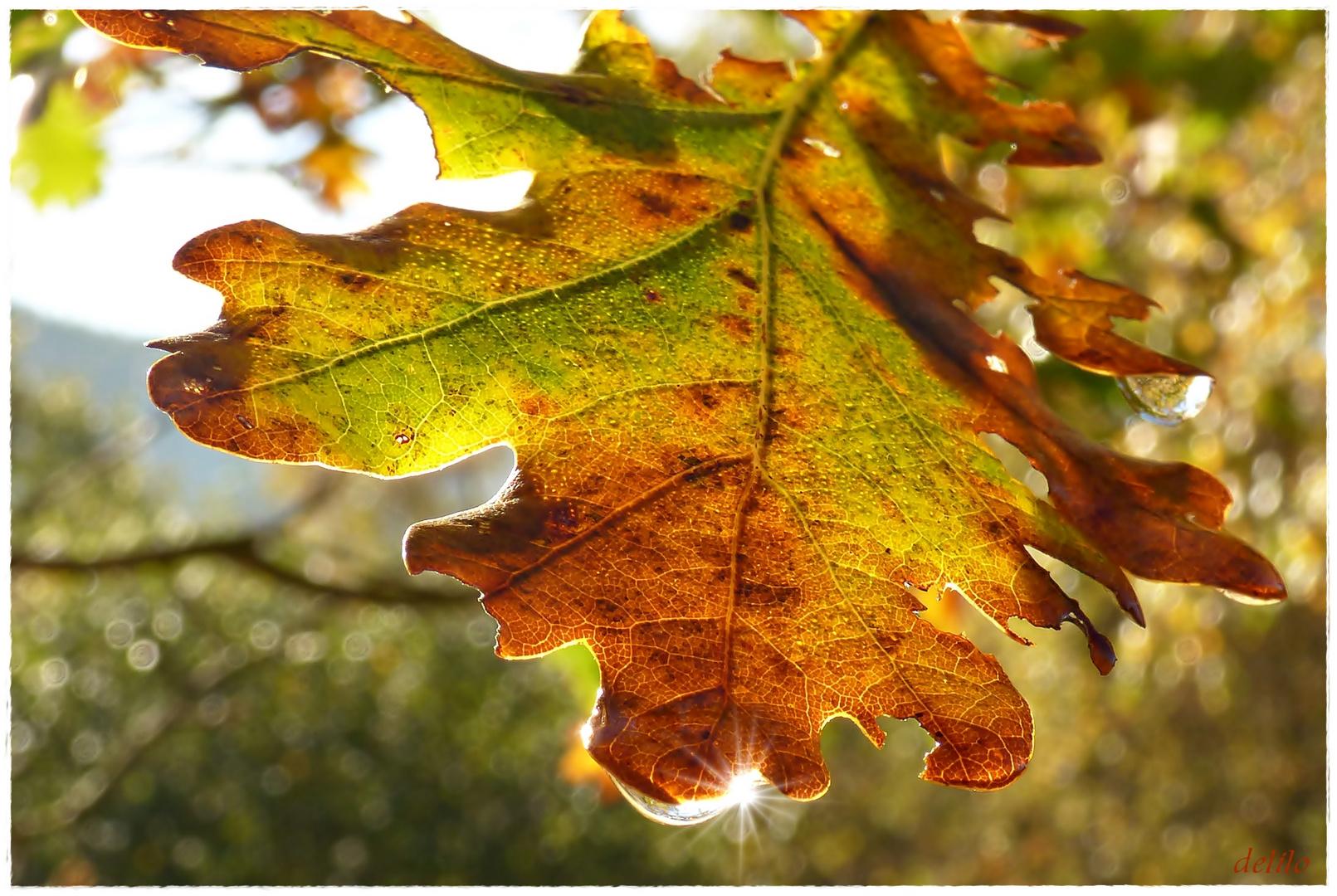 herbstliches Eichenblatt in der Sonne
