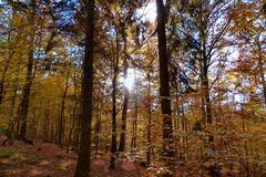 Herbstliches Farbenspiel im Sauerland