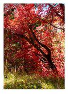 Herbstliches Gluehen