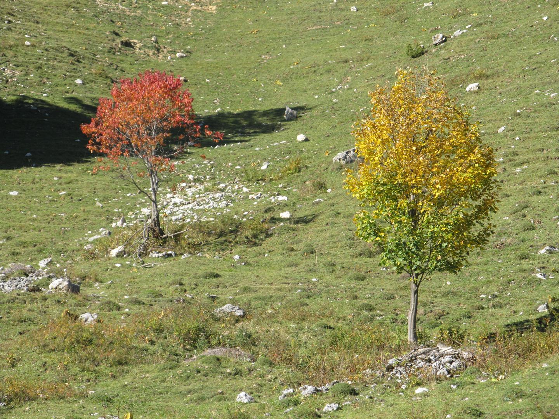 Herbstliches Laub