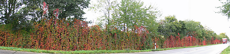 herbstliches Panorama II