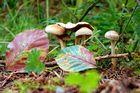 Herbstliches Pilzfoto