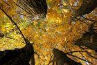 - Herbstliches Quintett -