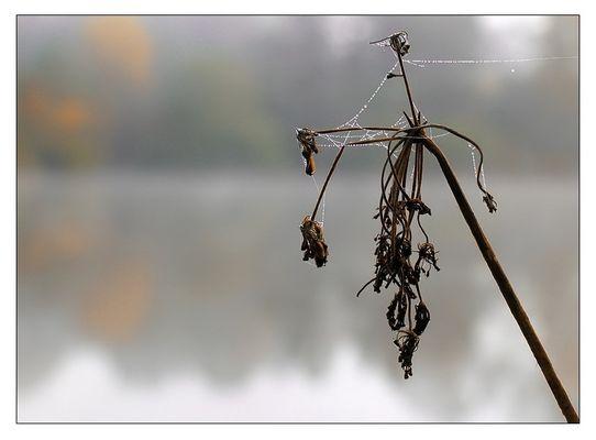 Herbstliches Schweigen