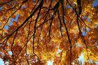Herbstliches Sonnendach