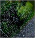 herbstliches Spinnennetz