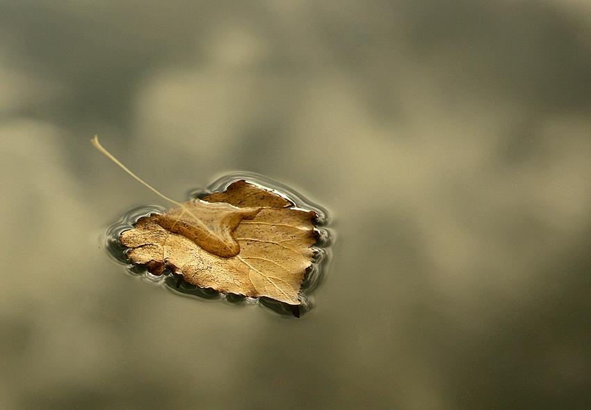 herbstliches Wasserblatt