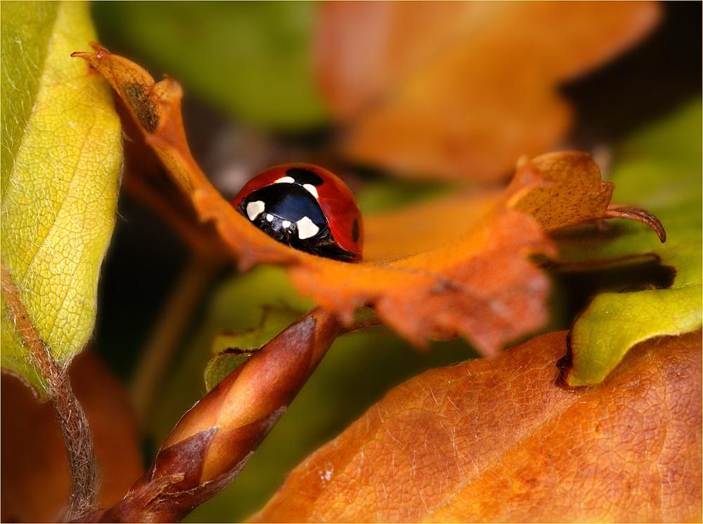 Herbstliches Wiegenkind