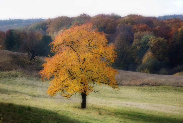 Herbstlich.....Herbstlicht