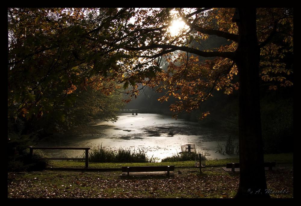 Herbstlich(t) 1