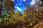 Herbstlicht (2)