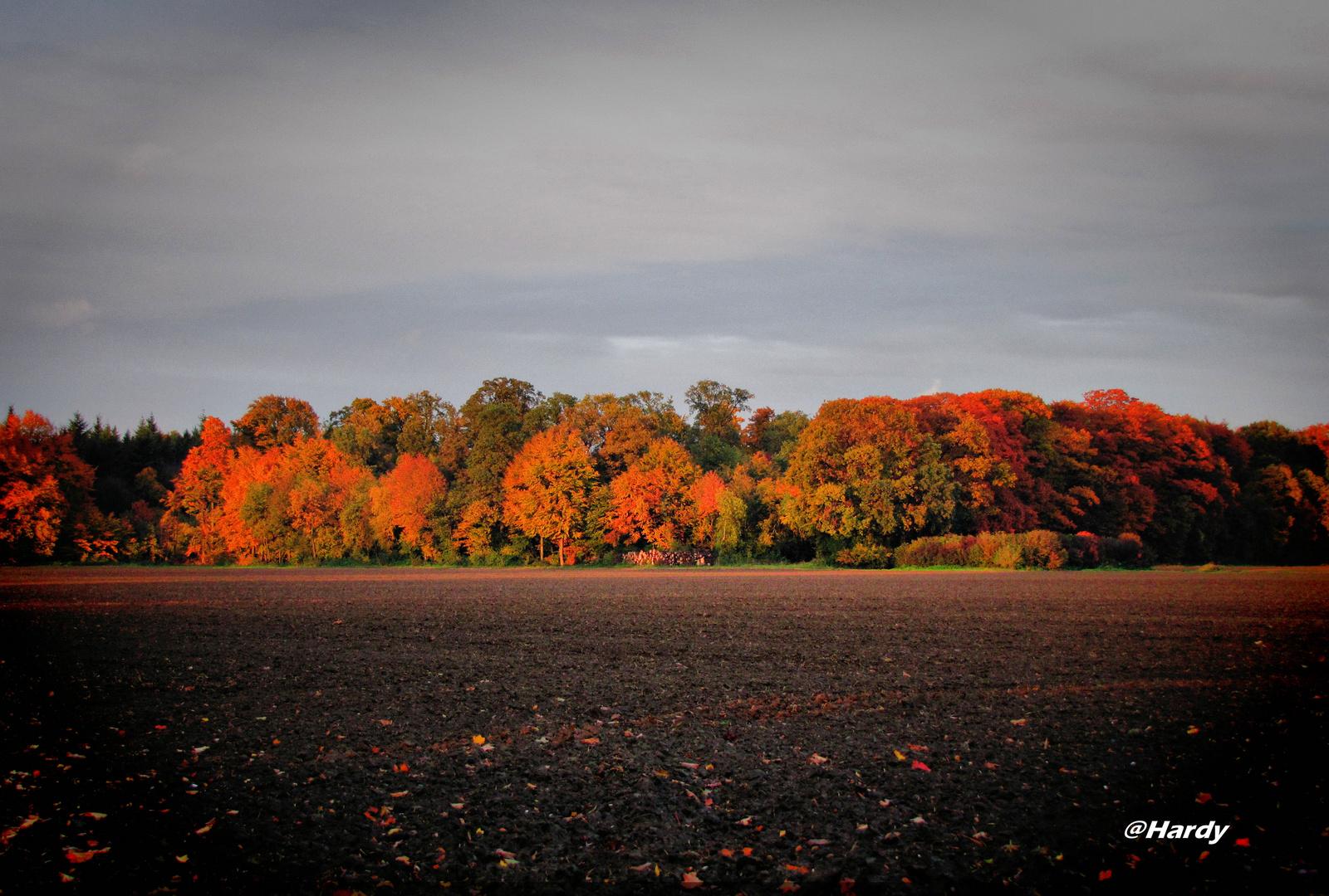 Herbstlicht!