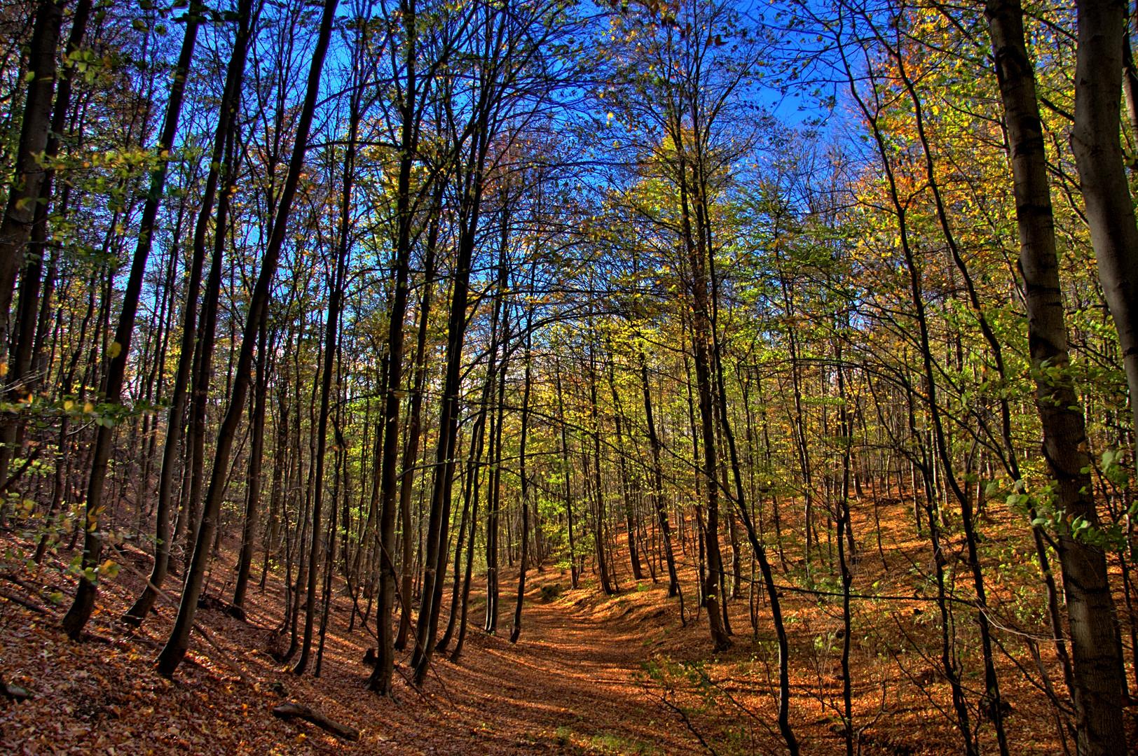 Herbstlicht (3)