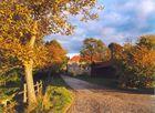 Herbstlich(t) 4