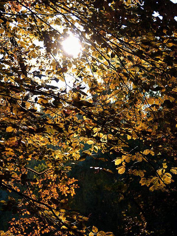 ...Herbstlicht