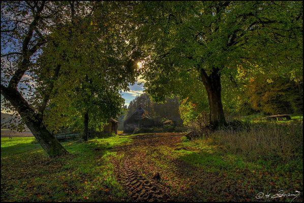 Herbstlicht am ...