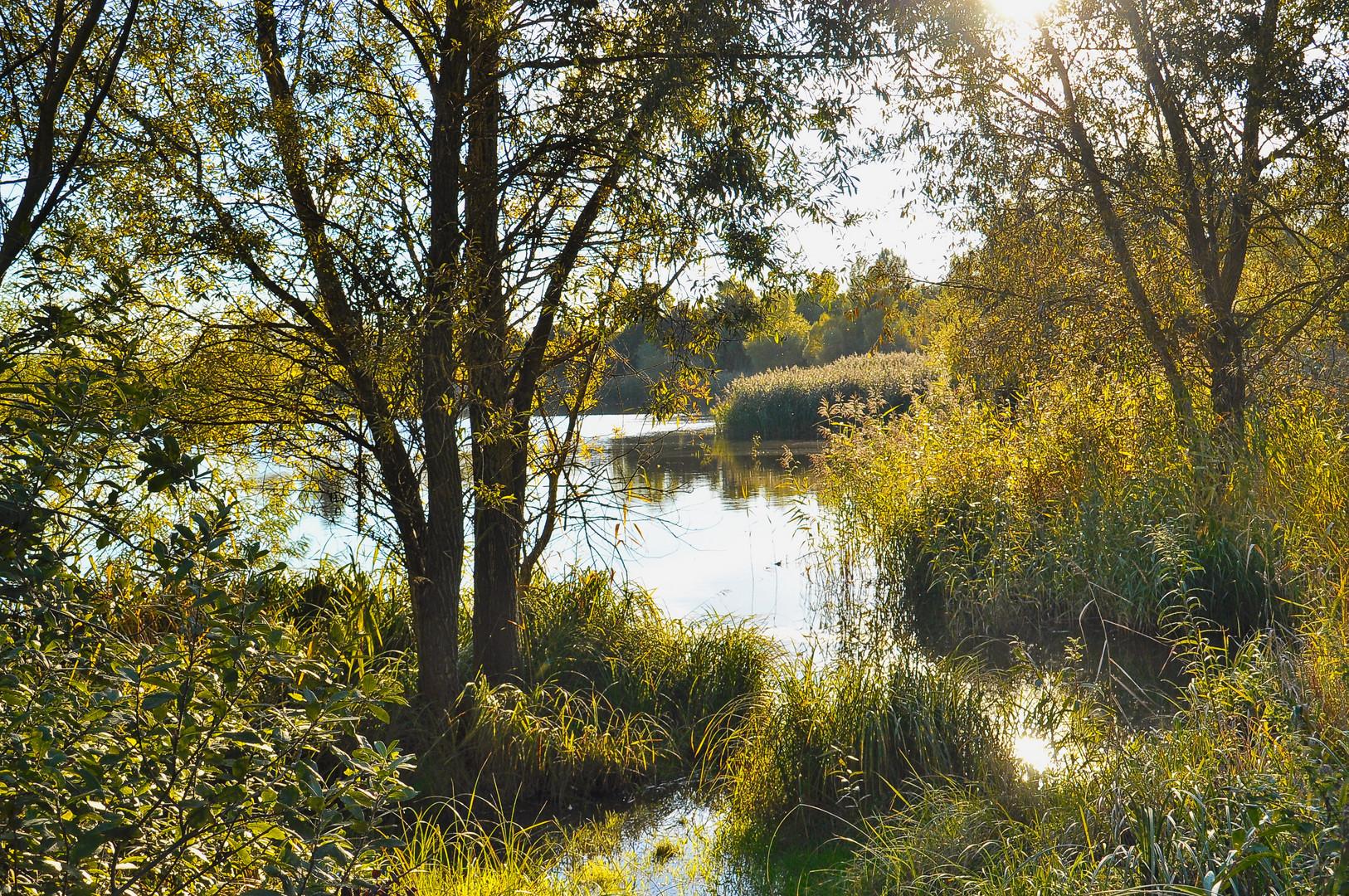 Herbstlicht am Teichufer