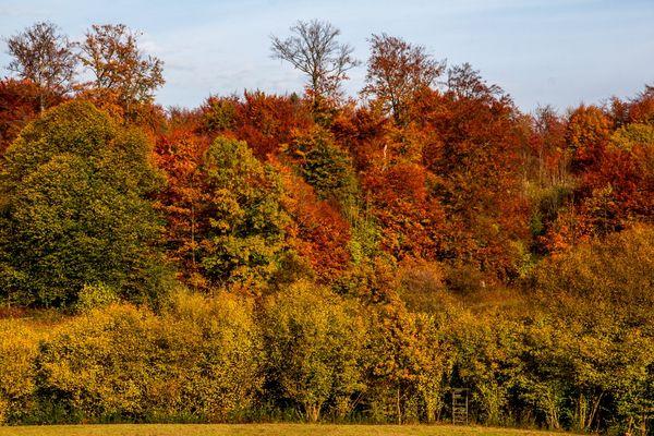 Herbstlicht auf Baumbestand im Harz