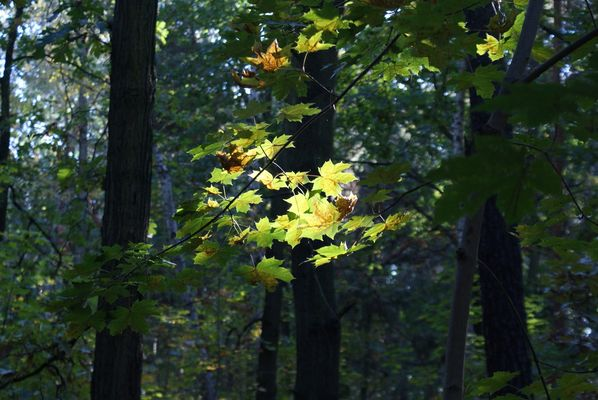 Herbstlicht-blicke
