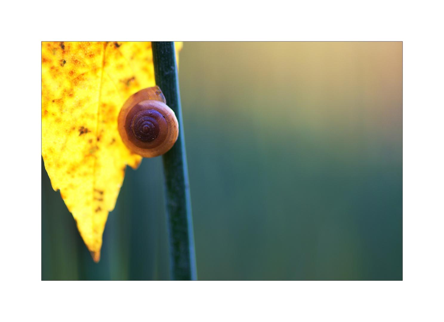 ~Herbstlicht~