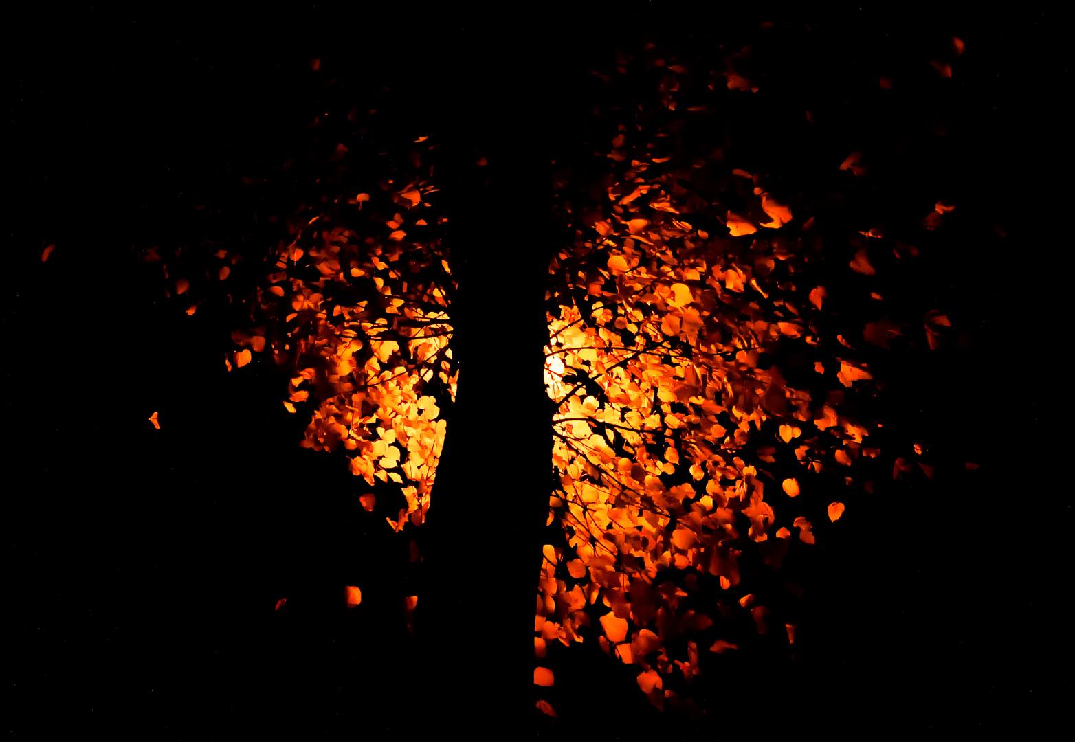 Herbstlicht für Mr. Kiss