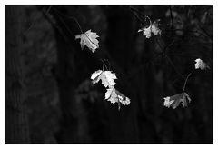 Herbstlicht _ Hiddensee