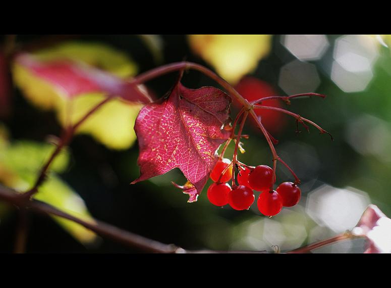 Herbstlicht I
