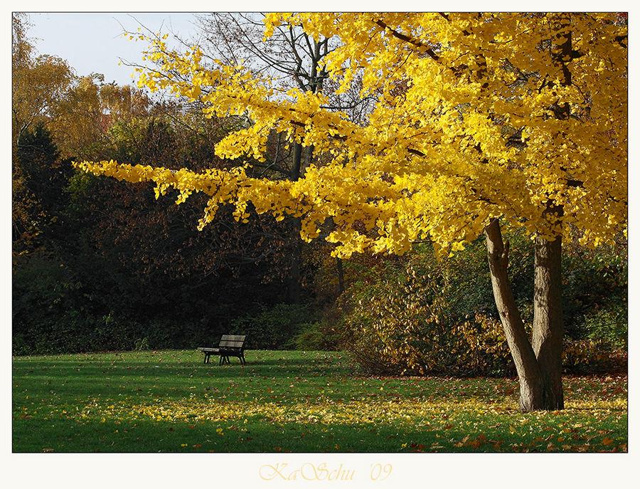 Herbstlicht IX