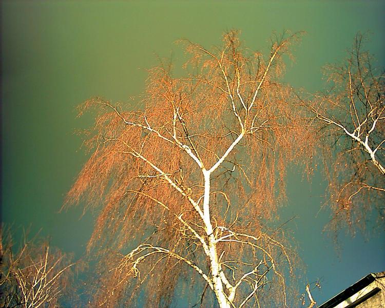 Herbstlicht4