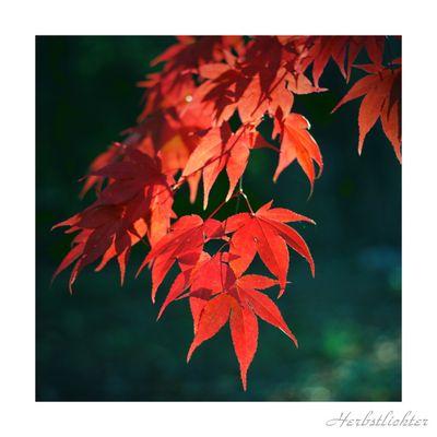 Herbstlichter I