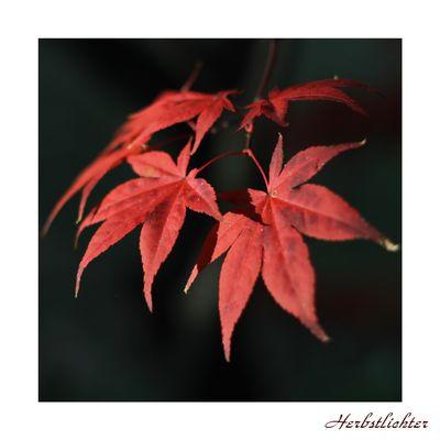 Herbstlichter III