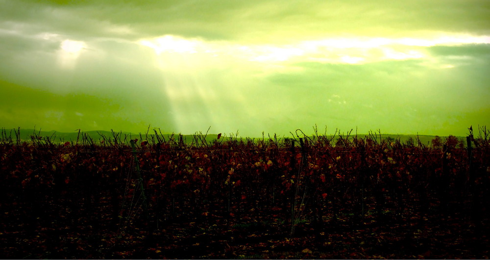 Herbstlichter - Wine and Shine